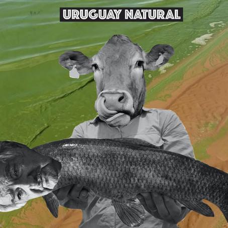Uruguay (Un)Natural - Internet Memes for Political Dissent