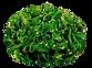 seaweed salad catering website.png