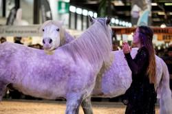 Elisa Laville Horse show