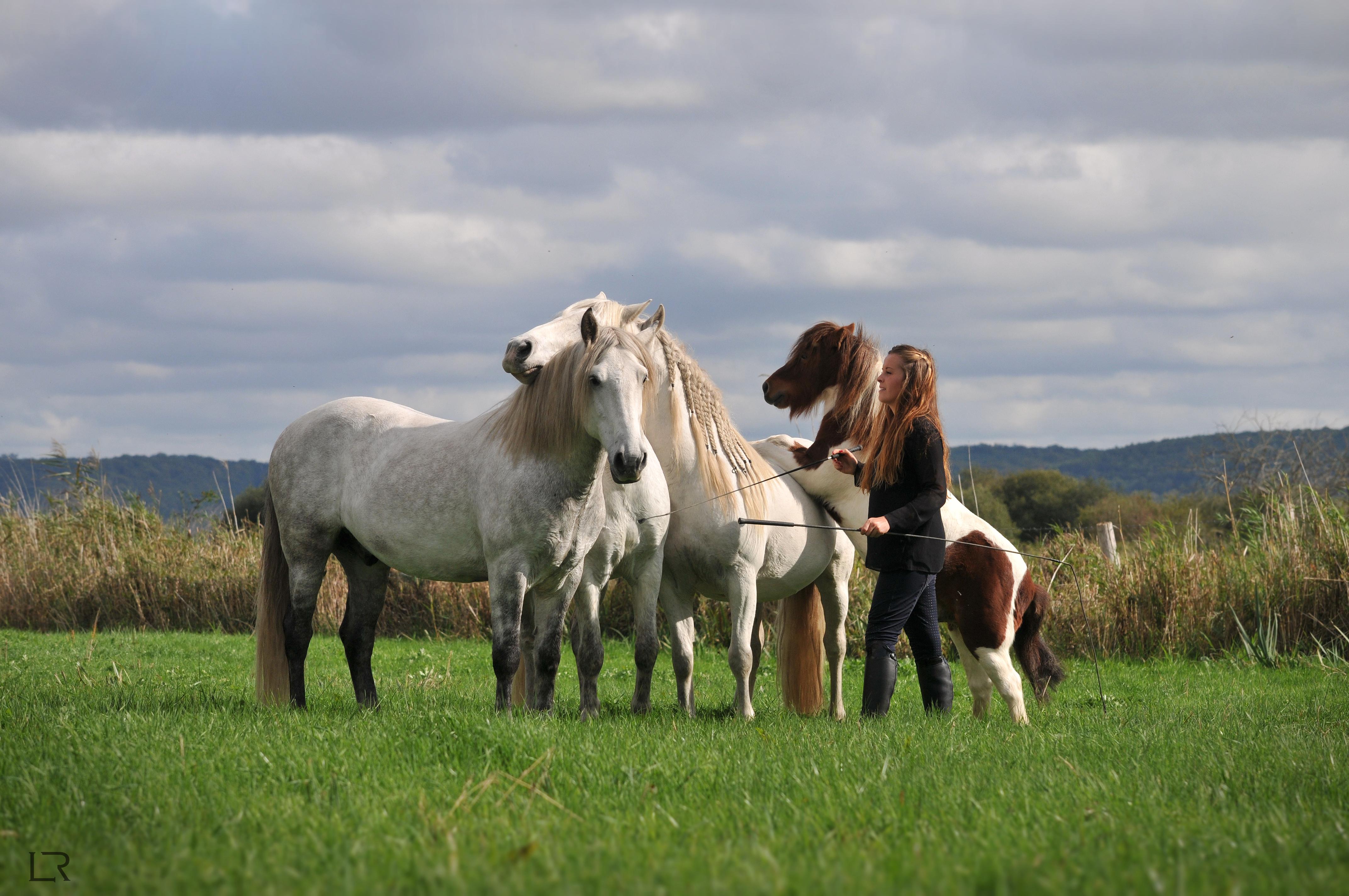 site équitation normandie