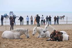 spectacle équestre plage