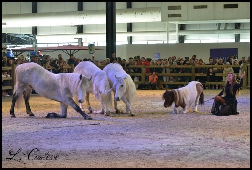 poneys show