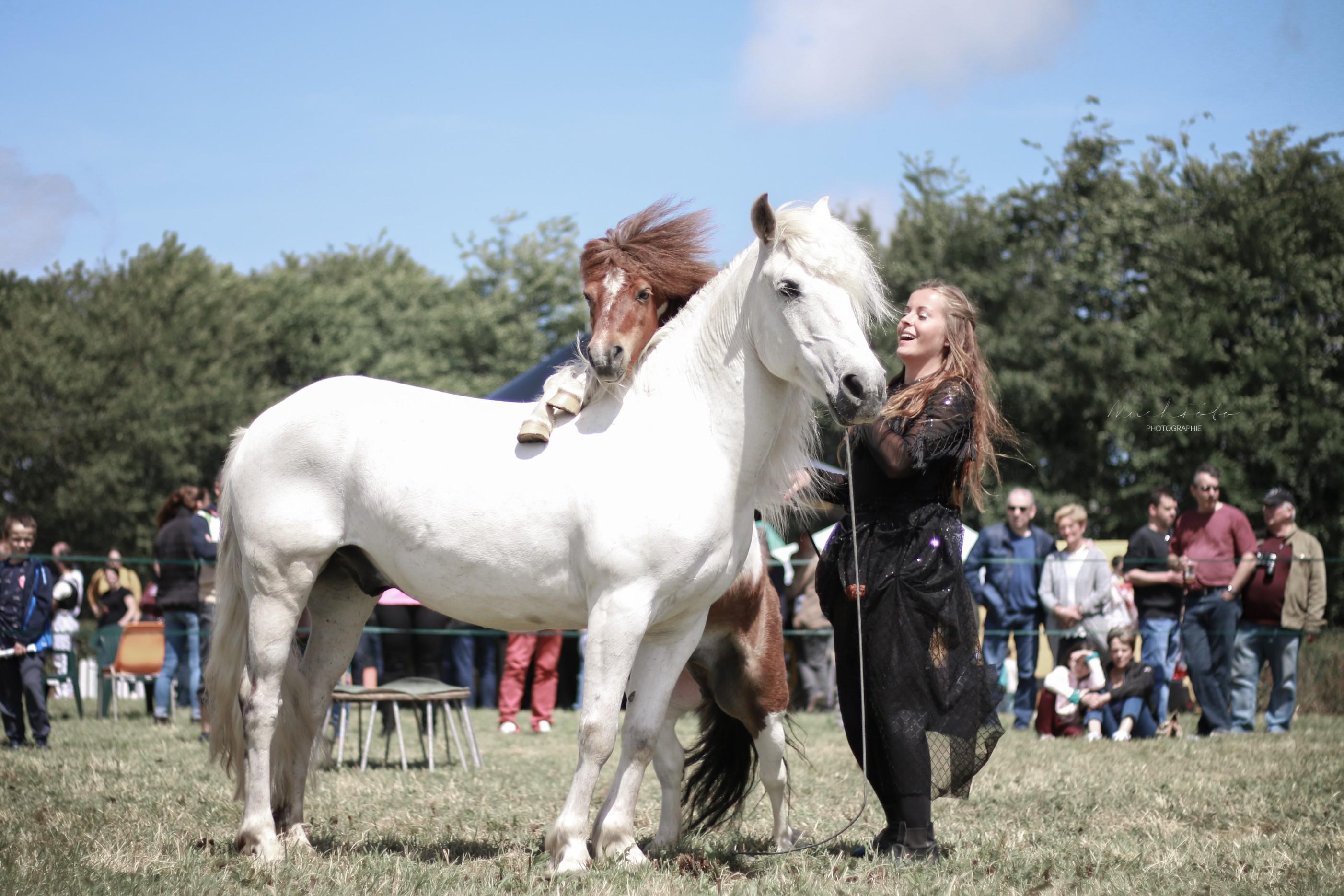 spectacle équitation normandie
