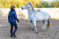 travail du cheval Normandie