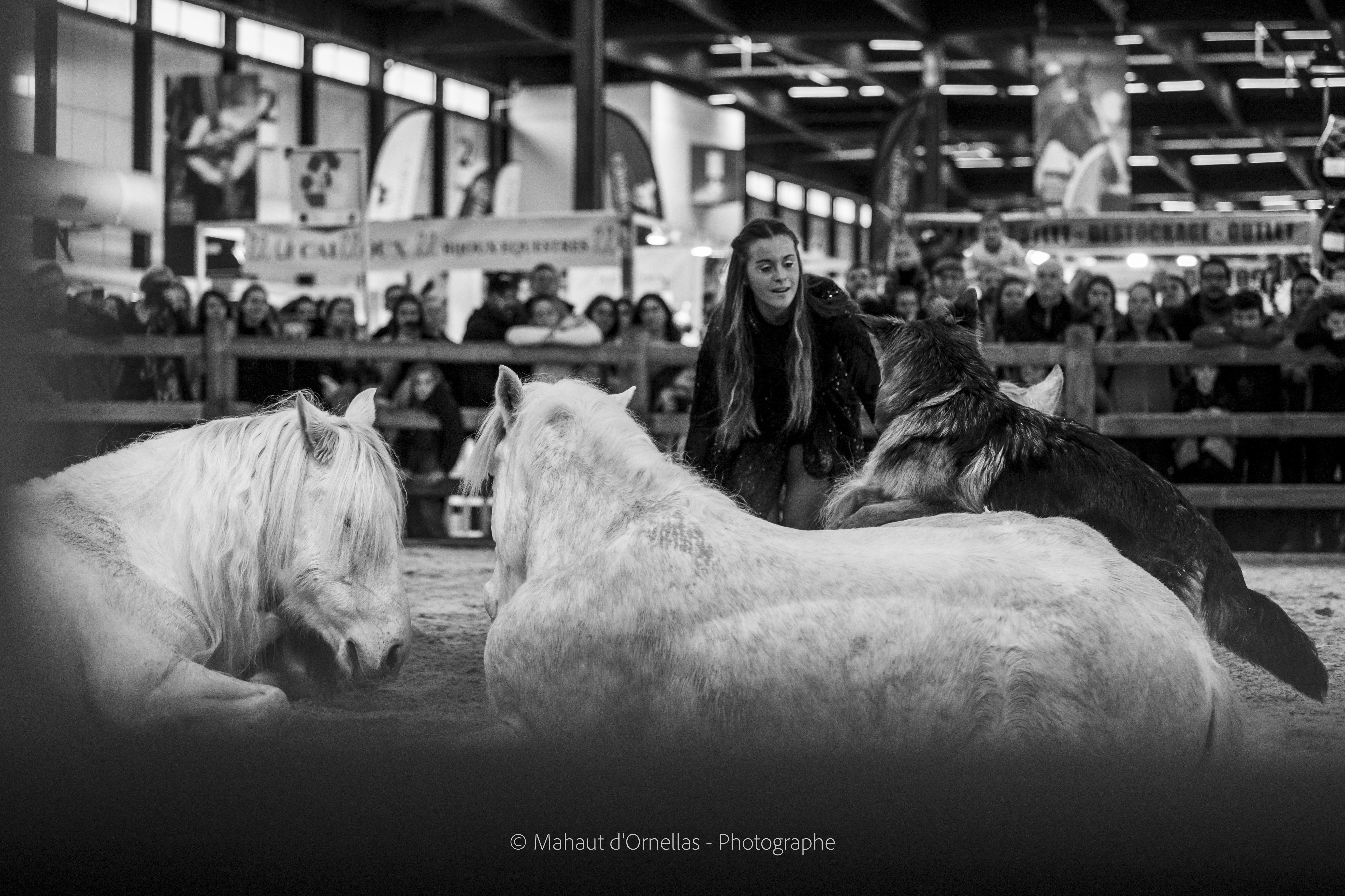 entrainement poneys