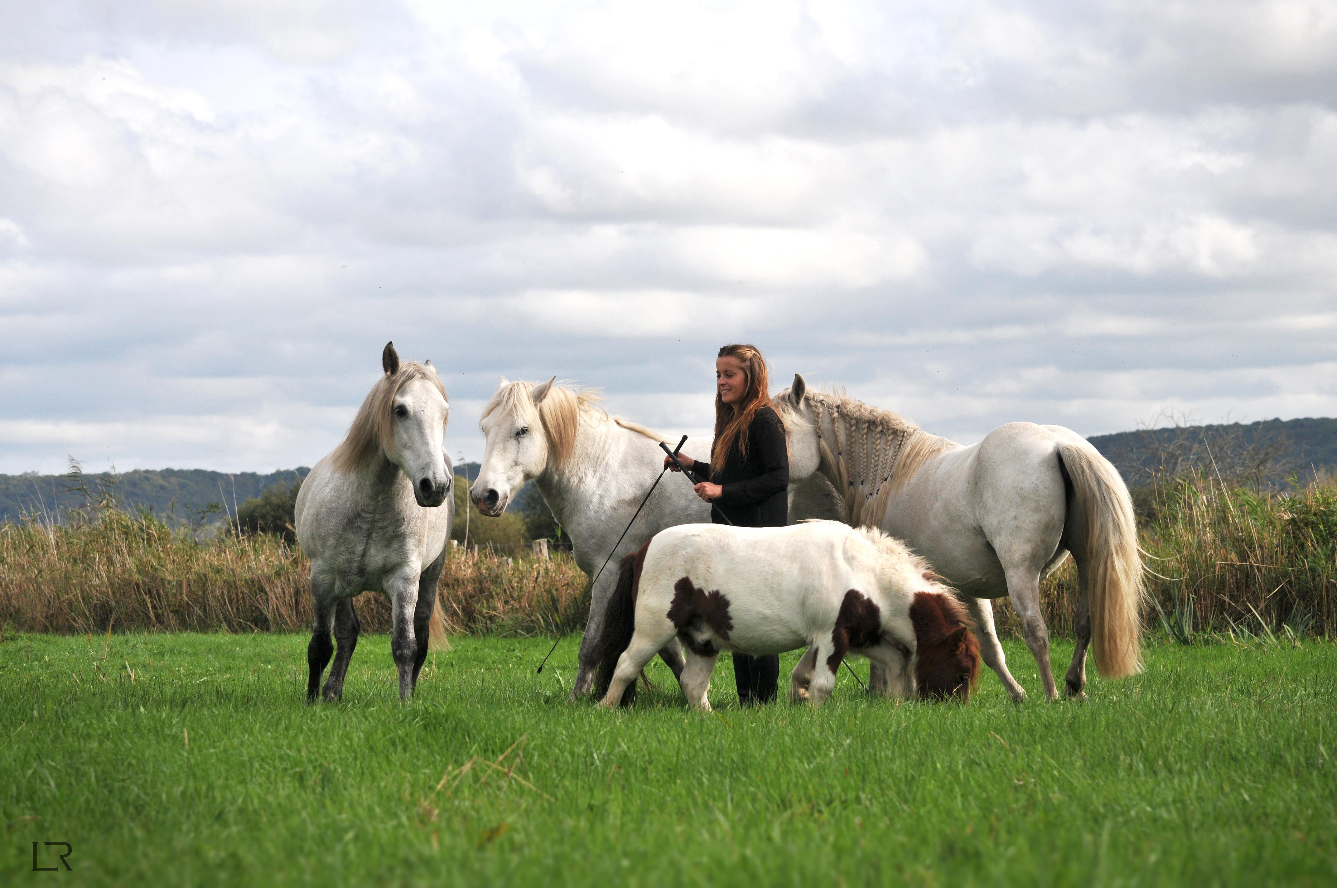 site équitation