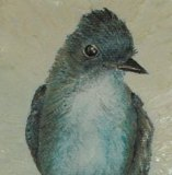 2007 Blue Bird