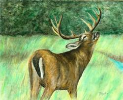 2007 Mule Deer 11x14