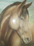 2005 State Fair Horse 11x14