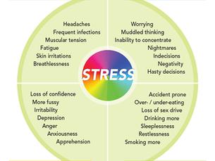 Stress: Body, Mind, Emotion, and Behavior