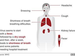 Coronavirus - Symptoms