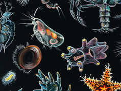 Plankton Piggy