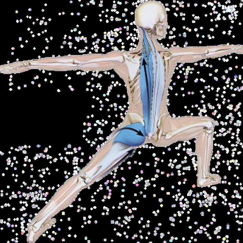 Yoga Anatomy, Alignment and its Benefits