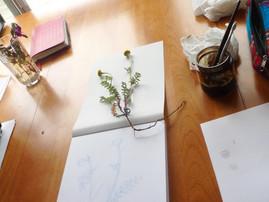 L'herbier boréal et La maison de la famille