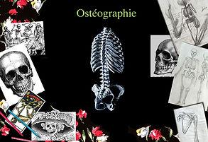 osteographie.jpg