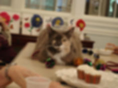 cat at a birthday party
