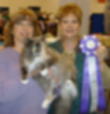 people and cat at a cat show