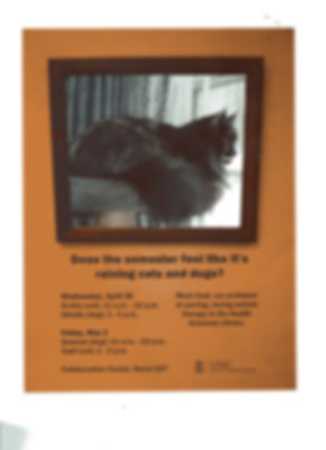 poster with a cat