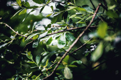 maiwenn-nicolas-photographer-2