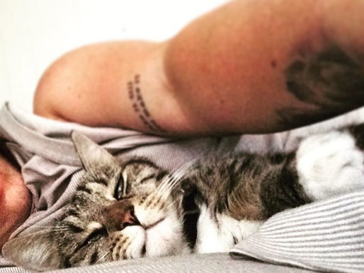Kittens, Coffee, and Creativity: A Day in the Life of a Widefoc.us Staffer