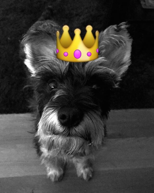 PrincessMaddie.JPG