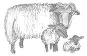 familia ovelles.jpg