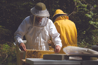 Passionate Beekeepers - Mart and Sander