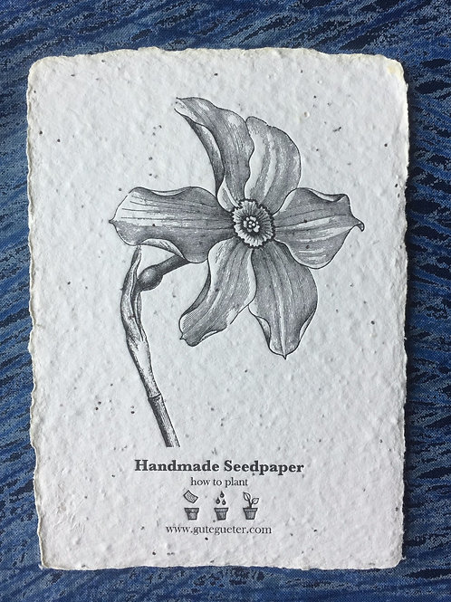"""""""Narcissus"""" Seed Card"""
