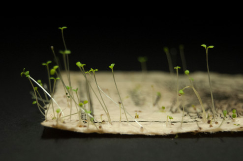 Seedpaper
