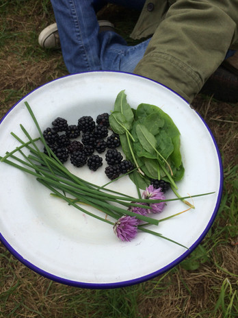 foraged flavours