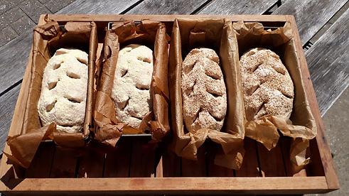 Brood bakken.jpg