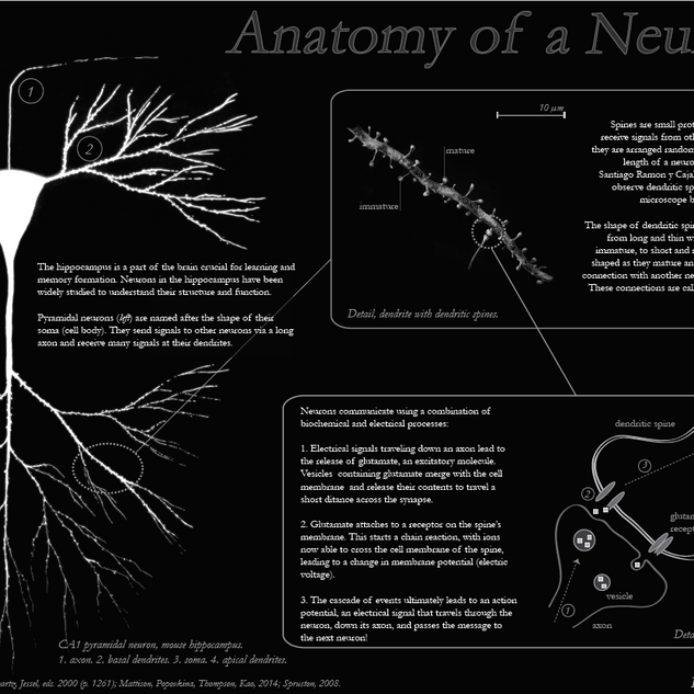 Neuron educational poster