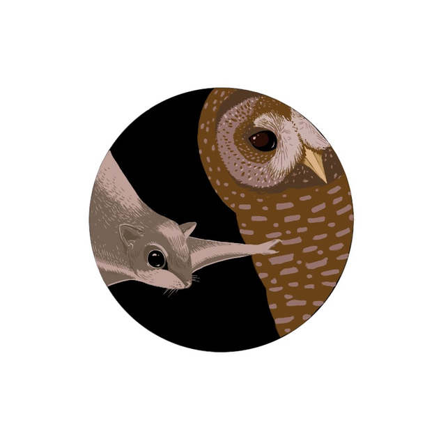 Northern spotted owl and northern flying squirrel