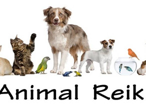 Distance Reiki for Your Pet