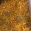 Thumbnail: Dried Calendula Flower