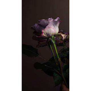 A quite singular rose._▪°•○.jpg