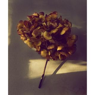 Hydrangea 2.png
