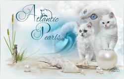Atlantic-Pearls