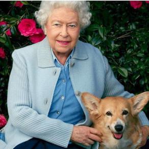 A murit unul dintre câinii Reginei Elisabeta