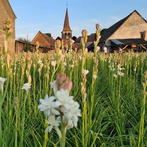 Sărbătoarea florii cu cel mai frumos miros / Fotoreportaj