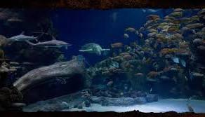 Cum a devenit casa pestilor acvariu