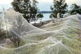 Australia acoperita de panze de paianjen