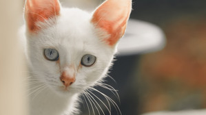 Animalele și COVID-ul. Recent, medicii au descoperit două cazuri de COVID-19 la animale