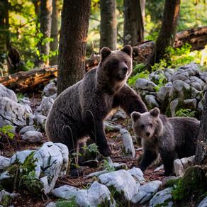 Ziua ursului și a marmotei