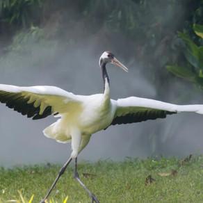 BBC: A reapărut o pasăre care nu a mai fost văzută de 300 de ani