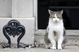 Larry sarbatoreste 10 ani in Downing Street