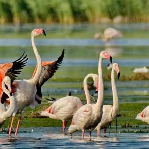 Nu deranjati pasarile flamingo