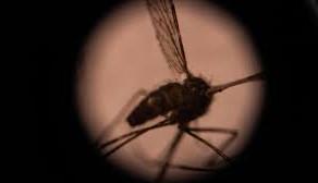 Vaccin impotriva malariei
