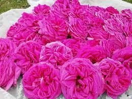 Trandafirii de la Curtea deschid evenimentele gastronomice din Banat