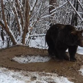 După imaginile impresionante cu ursoaica Ina, grădina zoo din Neamț ar putea fi desființată